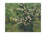 Roses, 1889 Lámina giclée por Vincent van Gogh