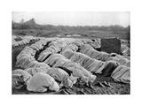 Muslims at Prayer, Algeria, 1920 Giclée-Druck von Biskra Frechon
