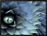 Pattern in Agave Cactus Framed Canvas Print by Adam Jones