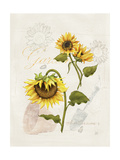 Romantic Sunflower I Premium Giclee Print by Jade Reynolds