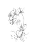 Botanical Sketch V Prints by Ethan Harper