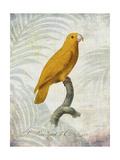 Parrot Jungle V Affiches par John Butler