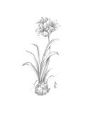 Botanical Sketch II Print by Ethan Harper