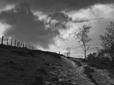 Lonely Path II Photographic Print by Martin Henson