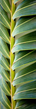Palma I Reproduction photographique par Susan Bryant
