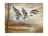 Pintails Premium Giclee Print by Ruane Manning
