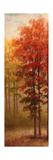 Fall Trees II Premium Giclee Print by Michael Marcon