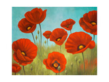 Field of Poppies II Premium Giclee Print by Vivien Rhyan