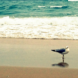 Seagull on Beach Reproduction photographique par Lisa Hill Saghini