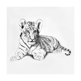 Tiger Premium Giclee Print by Vivien Rhyan