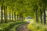 Tree Lined Country Lane in Rural Dorset, England. Spring (May) Reproduction photographique par Adam Burton