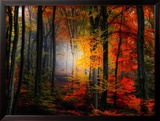 Light Colors Framed Photographic Print by Philippe Sainte-Laudy
