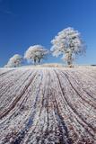 Hoar Frosted Farmland and Trees, Bow, Mid Devon, England. Winter Reproduction photographique par Adam Burton