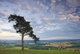 Pine Tree on Raddon Hill, Looking over Agricultural Countryside, Mid Devon, England. Summer Reproduction photographique par Adam Burton