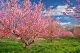 Spring Garden. Photographic Print by  GIS