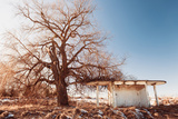 Winter Rural Roadside View Fotografisk trykk av Alexey Rumyantsev