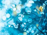 Rainy Flora in Bright Blue Light Fotografisk trykk av Alexey Rumyantsev