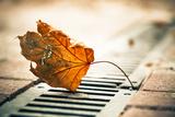 Faded City Leaf on a Ground Fotografisk trykk av Alexey Rumyantsev