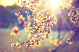 Beautiful Nature Scene with Blooming Tree and Sun Flare Impressão fotográfica por Subbotina Anna