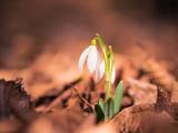 Spring Forest Flowers Closeup Fotografisk trykk av Alexey Rumyantsev