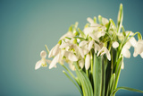 White Snowdrops Flowers Fotografisk trykk av Alexey Rumyantsev