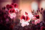 Red Fall Flowers Fotografisk trykk av Alexey Rumyantsev