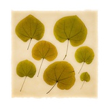 Leaves Giclee Print by Graeme Harris