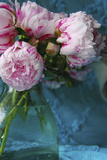 Peony Study Photographic Print by Anna Miller