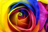 Rainbow Rose or Happy Flower Fotografie-Druck von  fullempty