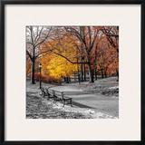 Park Pretty I Prints by Assaf Frank