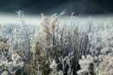 Frosty Sage Abstract IV, Grand Teton, Wyoming Photographic Print