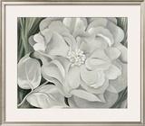 The White Calico Flower, c.1931 Art by Georgia O'Keeffe