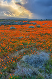 Poppy Spring Storm, Southern California Photographic Print
