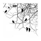 Birds in a Tree Affiche