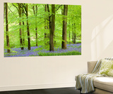 Common Bluebells (Hyacinthoides Non-Scripta) Flowering in a Beech Wood Wall Mural by Adam Burton