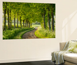 Tree Lined Country Lane in Rural Dorset, England. Spring (May) Wall Mural by Adam Burton
