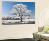 Hoar Frosted Tree on the Banks of a Frozen Lake, Morchard Road, Devon, England. Winter Wall Mural by Adam Burton