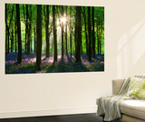 Early Morning Sunlight in West Woods Bluebell Woodland, Lockeridge, Wiltshire, England. Spring Wall Mural by Adam Burton