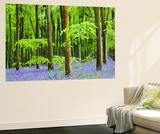 Common Bluebells (Hyacinthoides Non-Scripta) Flowering in West Woods in Springtime Poster géant par Adam Burton