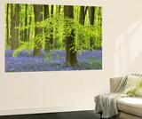 Bluebells and Beech Trees in West Woods, Wiltshire, England. Spring (May) Veggmaleri av Adam Burton
