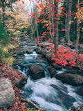 Autumn Stream Revisited, Acadia Maine Coast Art sur métal  par Vincent James