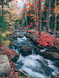 Autumn Stream Revisited, Acadia Maine Coast Metal Print by Vincent James