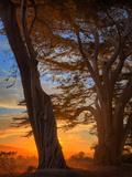 Magical Cypress Sunrise, Point Reyes National Seashore Metalldrucke von Vincent James