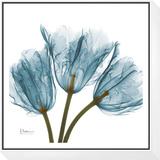 Tulips in Blue Framed Print Mount by Albert Koetsier