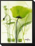 Coquelicot Vert II Framed Print Mount by  Marthe