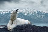 White Polar Bear on the Ice Stampa fotografica di  yuran-78
