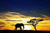 A Lone Elephant Africa Fotografisk tryk af  kesipun