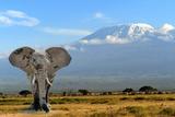 Elephant Fotografisk tryk af  byrdyak