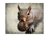 Gray Squirrel with Nut Giclée-tryk af Jai Johnson