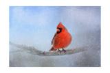 Cardinal in the Snow Reproduction procédé giclée par Jai Johnson